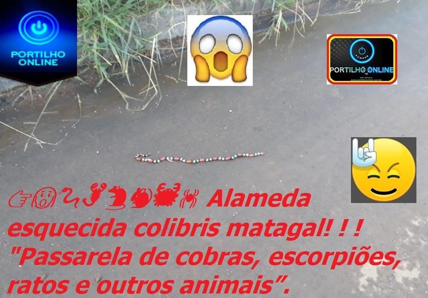 """👉😱🐍🦂🐀🐁🦀🕷 Alameda esquecida colibris matagal! ! ! """"Passarela de cobras, escorpiões, ratos e outros animais""""."""