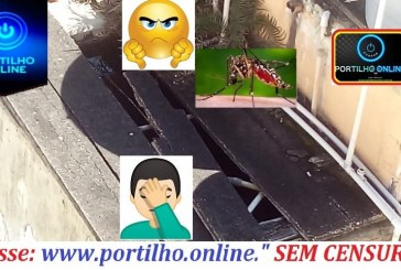👉😠😱🤔😡💉🌡 CAIXA DO MOSQUITO DA DENGUE! Boa tarde! Pela credibilidade que o www.portilho.online…