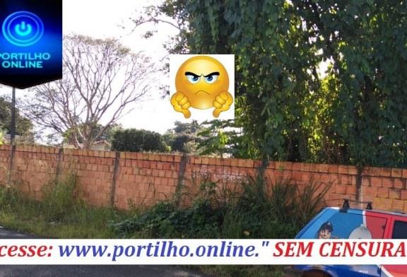 👉😠🤔😱👊 MATO DE LOTE ABANDONADO INVADE CASA DE VIZINHOS! Rua professor Olímpio dos Santos 52. São Vicente.