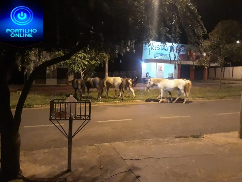 """Portilho aqui tem mais cavalos do que na fazenda do Lula"""".  Portilho… Eu olho no seu site 30 vezes por dia."""