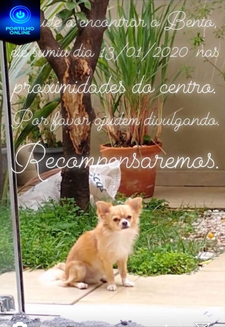O BENTO DESAPARECEU!!!