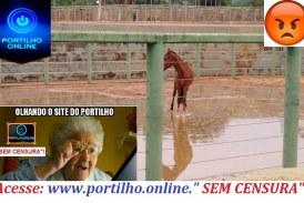 👉😠😠🤔😱😡😠🐴🐎COVARDIA!!! Bom dia Portilho… Em Guimarânia na arena do rodeio esse cavalo preso dentro de água já tem mais de uma semana